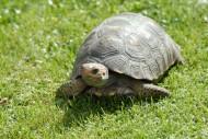 爬行的烏龜圖片_12張