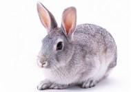 兔子圖片_21張