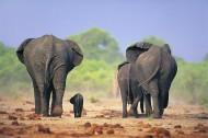 溫馨大象家庭圖片_24張