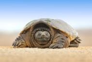 烏龜高清圖片_12張