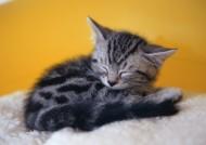 小猫睡姿图片_10张