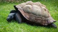 行動緩慢的烏龜圖片_12張