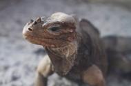 蜥蜴高清图片_12张