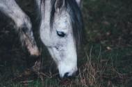 一匹正在草地上吃草的马图片_10张