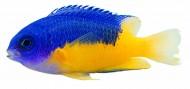 观赏鱼特写图片_215张