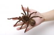 蜘蛛图片_9张