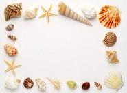 贝壳和海螺图片_47张
