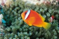 海洋鱼类生物特写图片_37张