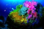 深海潜水图片_57张