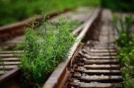 历史记忆中的铁路图片_8张