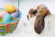 复活节兔子图片_27张