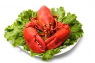 美味的大龙虾图片_18张