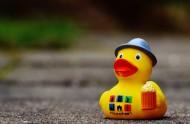 黄色塑料的玩具鸭图片_15张