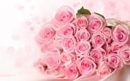 粉色玫瑰图片_8张