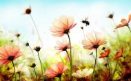 簡約唯美的花卉圖片_10張