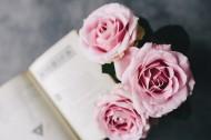 娇滴的粉玫瑰图片_17张