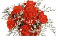 浪漫玫瑰圖片_23張