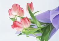 美丽花束图片_7张