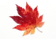 秋季樹葉特寫圖片_47張