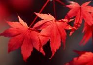 秋季動植物圖片_26張