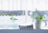 室內植物草藥圖片_32張