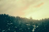 远处的松树林图片_15张