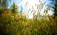 柔和植物图片_14张