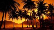 棕櫚樹圖片_13張
