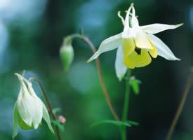 一组野外的白色野花图片欣赏