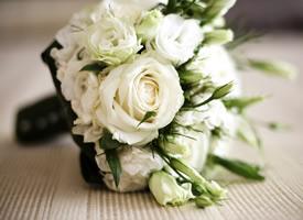 一組純潔高貴的白玫瑰圖片欣賞