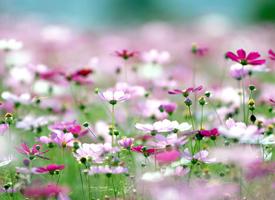 姹紫嫣红的花卉盛开着,展现那勃勃生