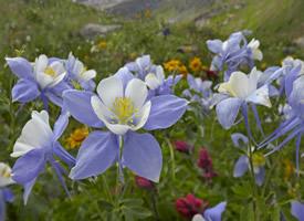 一组各色各样的鲜花高清图片欣赏