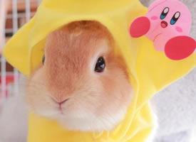 十一区的fualii,一个酷爱帽子的小兔叽