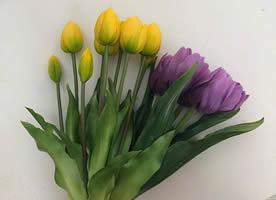 一組個個花苞一舉展開各種顏色的郁金香圖片