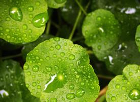 一组绿色的植物绿叶护眼壁纸欣赏