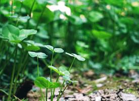 一组绿色护眼的植物绿叶嫩芽图片欣
