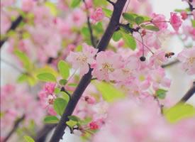 三月初春,自然是草长莺飞、花红柳绿的人间好时节