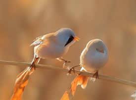 晨鸟起舞,双宿双栖美景图片欣赏