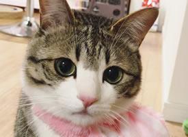 有着圆圆大眼睛的可爱小猫猫图片欣赏