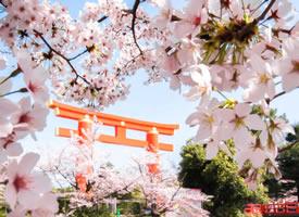 约好春日樱花和你 春天如约而至  别负花期