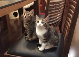 2只可爱的猫姐妹同步率竟然高达100%
