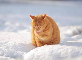美美的橘猫,吸一口,面包的香气