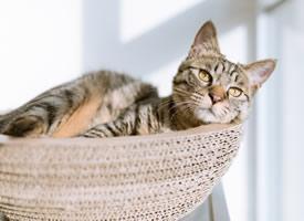 一组乖巧可爱的小猫咪高清图片欣赏