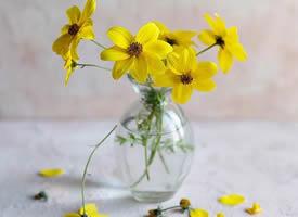 一组超美的有意境感的鲜花图片欣赏