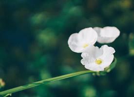 清新淡雅野花摄影图片桌面壁纸