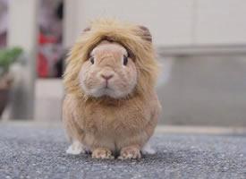 炒鸡蓬松柔软的小兔兔,看着就手感一级棒啊