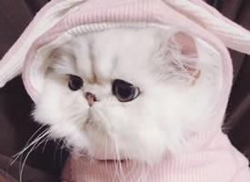 一组大眼睛特别萌的小猫图片欣赏