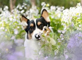 春天来了 汪们都出来看魅力的花朵