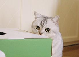活捉一只呆萌可爱搞怪的小猫图片欣赏