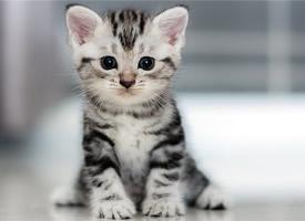 可爱萌宠猫咪高清桌面壁纸欣赏